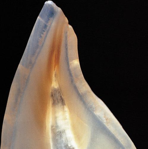 Zahntechnik Texte Schreiben Artikel Bericht Interview CeraMotion Dentaurum